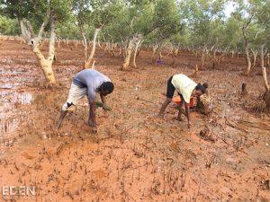 Zwei ArbeiterInnen pflanzen Bäume in die Erde