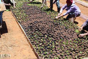 ArbeiterInnen legen Baumsetzlinge an